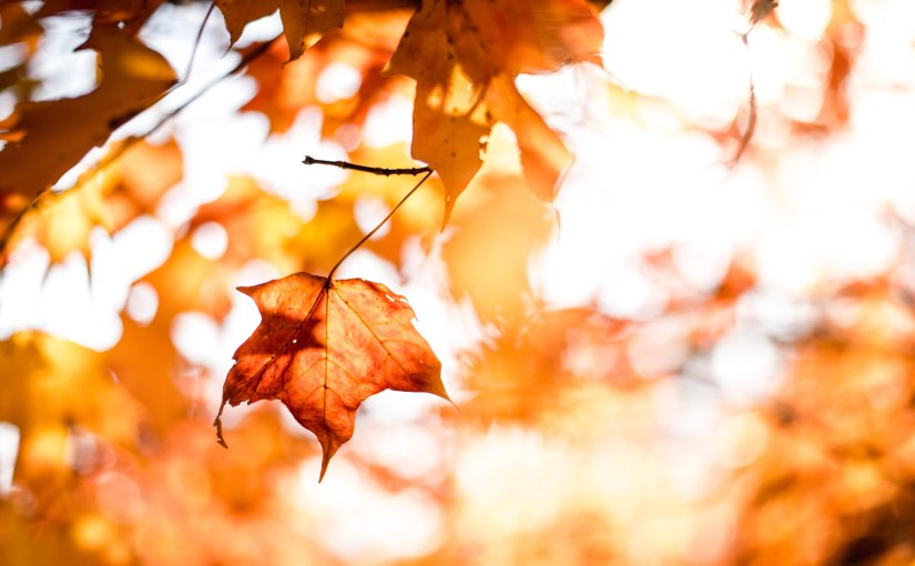There's a time for everything: the seasons oflife